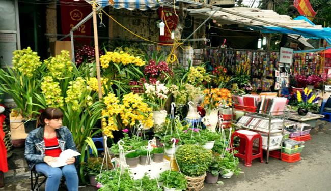 Coloful flowers with different size and species that make you have more choice for the upcoming Tet holiday
